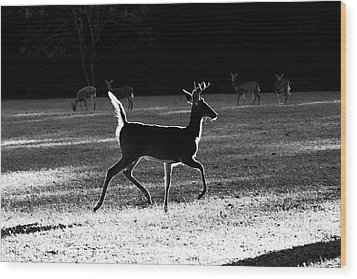 Wood Print featuring the photograph Glowing Buck by Lorna Rogers Photography