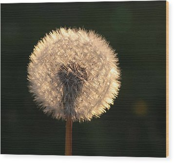 Glowing Dandelion Clock Wood Print