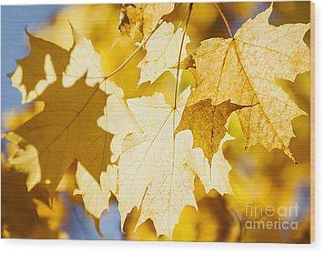 Glowing Fall Maple Leaves Wood Print by Elena Elisseeva