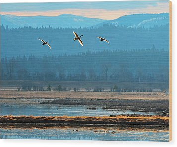 Glowing Flight  Wood Print by Annie Pflueger