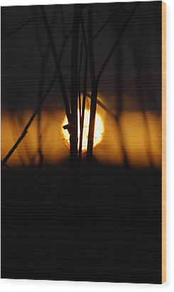 Wood Print featuring the photograph Glowing Lace by Jani Freimann