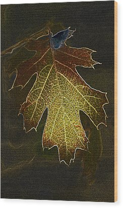 Wood Print featuring the photograph Glowing Leaf by Judi Baker