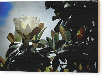 Glowing Magnolia Wood Print by Pamela Blizzard