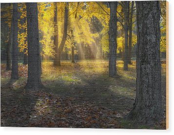 Glowing Maples Wood Print by Bill Wakeley