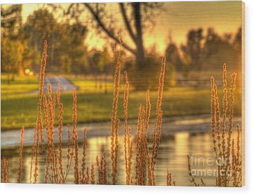 Wood Print featuring the photograph Glowing Plants In A Pond by Jim Lepard
