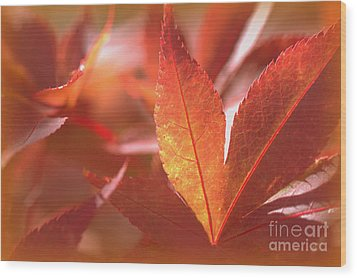 Glowing Red Leaves Wood Print