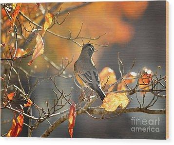 Glowing Robin 2 Wood Print