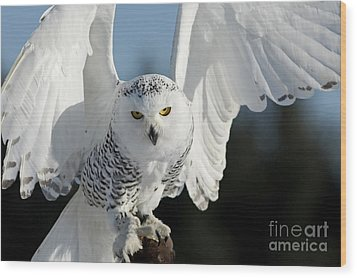 Glowing Snowy Owl In Flight Wood Print by Inspired Nature Photography Fine Art Photography