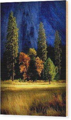 Glowing Trees Wood Print