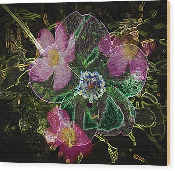 Glowing Wild Rose Wood Print by Penny Lisowski