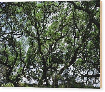 Gnarled Live Oaks Wood Print