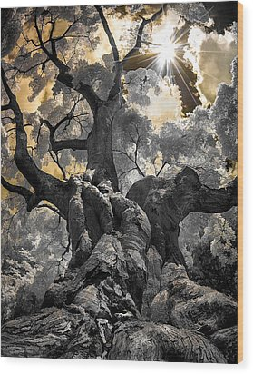 Wood Print featuring the photograph Gnarled Maple by Steve Zimic