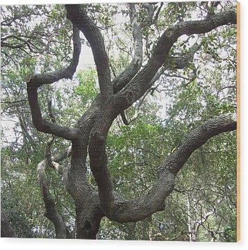 Gnarled Tree Wood Print by Cathy Lindsey