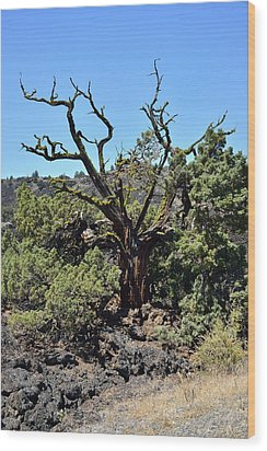 Gnarled Tree On The Lava Beds - Portrait Wood Print by Rich Rauenzahn