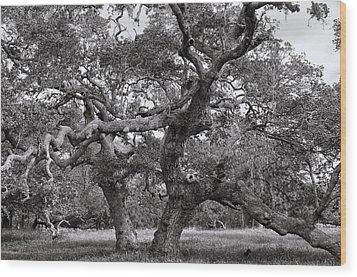 Gnarly Tree  Wood Print