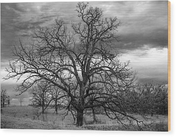 Wood Print featuring the photograph Gnarly Tree by Sennie Pierson