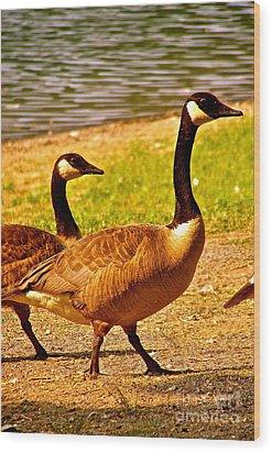 Go Geese Wood Print
