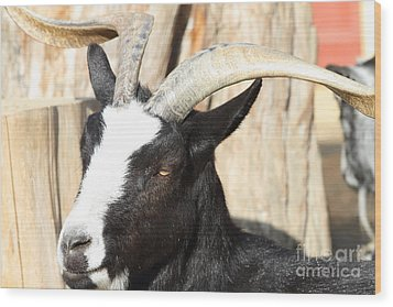 Goat 7d27396 Wood Print by Wingsdomain Art and Photography