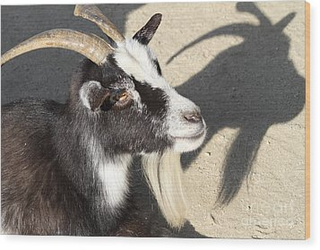 Goat 7d27402 Wood Print by Wingsdomain Art and Photography