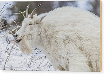 Wood Print featuring the photograph Goat On The Mountain by Yeates Photography