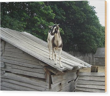 Wood Print featuring the photograph Goat On The Roof by Kerri Mortenson