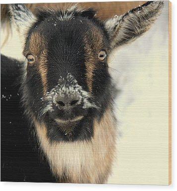Goatstache Wood Print by Kathy Bassett