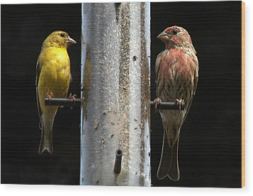 Wood Print featuring the photograph Gold And Purple Finch by Geraldine Alexander