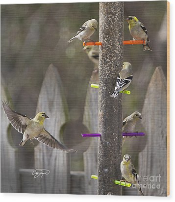 Gold Finch Cleared For Landing Wood Print by Cris Hayes
