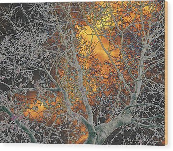 Gold In The Midst Of Winter Wood Print by Diane Miller