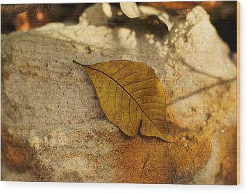 Wood Print featuring the photograph Gold Leaf by Jane Eleanor Nicholas