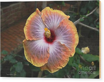 Wood Print featuring the photograph Gold Rim Hibiscus by Susan Wiedmann