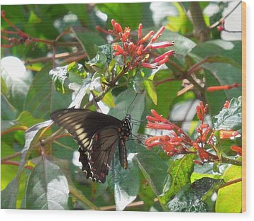 Wood Print featuring the photograph Gold Rim Swallowtail by Ron Davidson