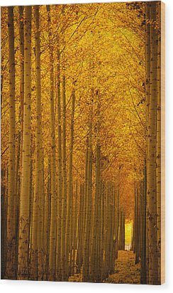 Golden Alley Wood Print