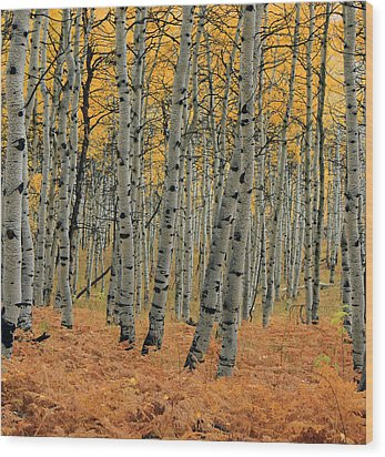 Golden Aspen Forest Wood Print by Johnny Adolphson