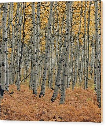 Golden Aspen Forest Wood Print
