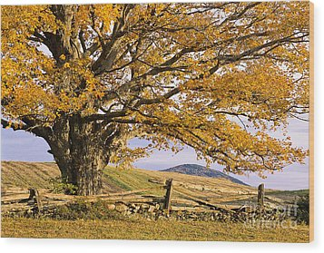 Golden Autumn Wood Print by Alan L Graham