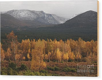Golden Autumn - Cairngorm Mountains Wood Print by Phil Banks