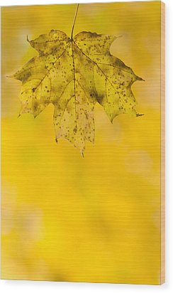 Wood Print featuring the photograph Golden Autumn by Sebastian Musial