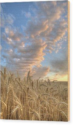 Golden Barley Wood Print