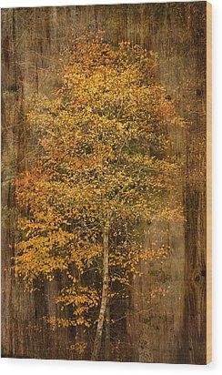 Golden Birch Wood Print by Liz  Alderdice