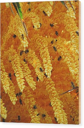 Golden  Buzz Wood Print by Linda Hollis