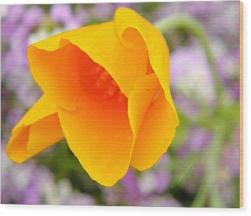 Golden California Poppy Wood Print by Chris Berry