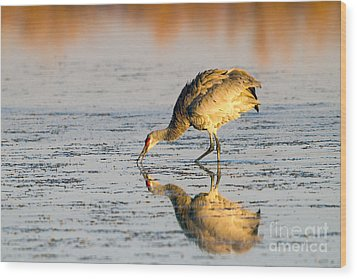 Golden Crane Reflections Wood Print by Martha Marks