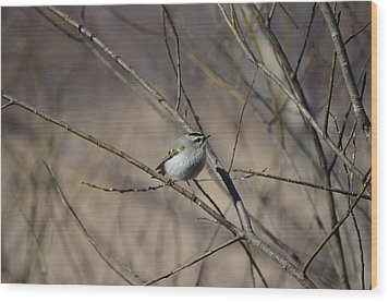 Wood Print featuring the photograph Golden-crowned Kinglet by James Petersen