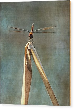 Wood Print featuring the photograph Golden Dragonfly I by Dawn Currie