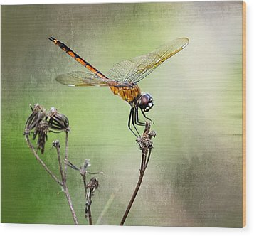 Wood Print featuring the photograph Golden Dragonfly II by Dawn Currie