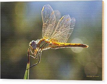 Golden Dragonfly Wood Print by Martina  Rathgens
