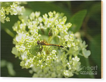 Golden Dragonfly Wood Print by Tannis  Baldwin