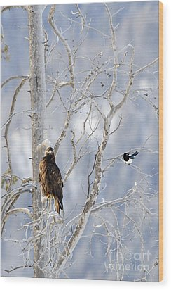 Golden Eagle And The Magpie Wood Print