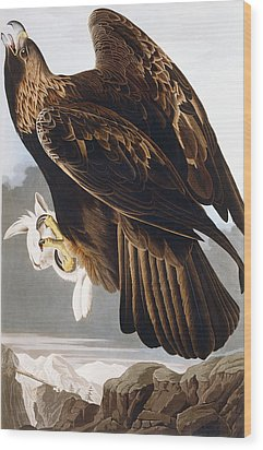 Golden Eagle Wood Print by John James Audubon